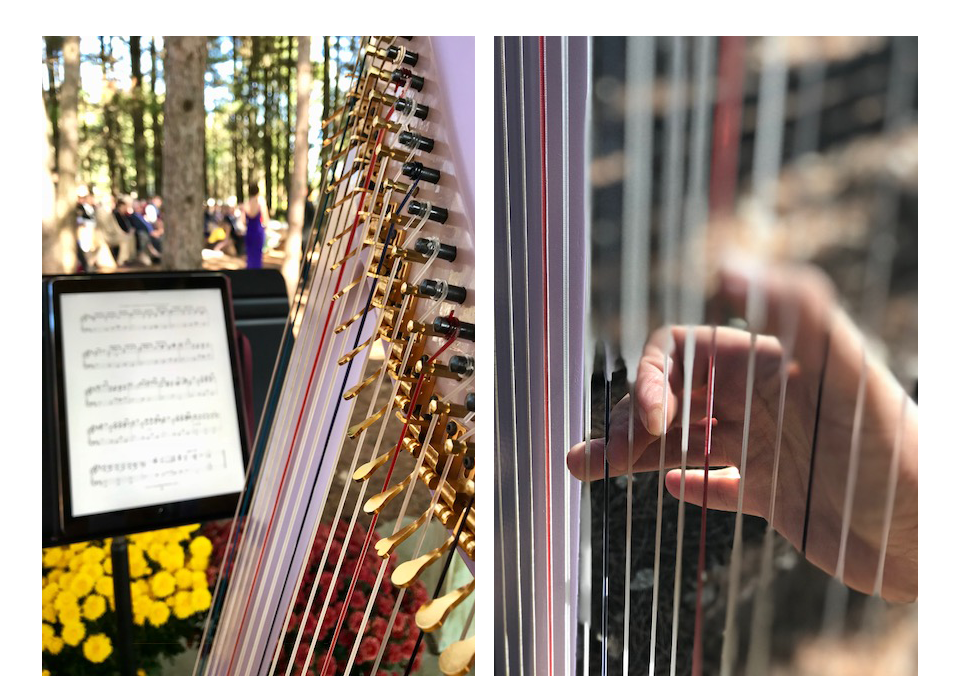 image: Harpist for Weddings, events, or any occasion